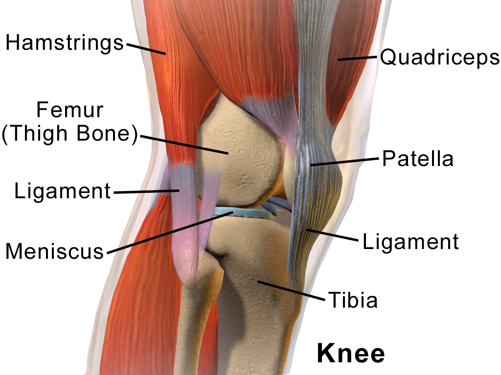 """Knee Anatomy""Blausen.com staff. ""Blausen gallery 2014"". Wikiversity Journal of Medicine. DOI:10.15347/wjm/2014.010. ISSN 20018762. with written author permission for use."